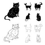 Persian, Cornish rex and other species. Cat breeds set collection icons in black,outline style vector symbol stock. Illustration Stock Photos