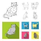 Persian, Cornish rex and other species. Cat breeds set collection icons in outline,flat style vector symbol stock. Illustration Stock Photography