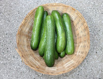 Persian cucumber. Cucumis sativus, burpless thin skinned cucumber with bumpy skin, consumed without removing skin stock images