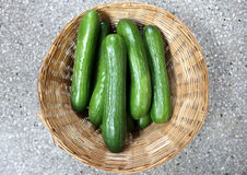 Persian cucumber. Cucumis sativus, burpless thin skinned cucumber with bumpy skin, consumed without removing skin royalty free stock photos