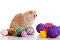 Persian exotic cat  with balls of different colours Stock Photography