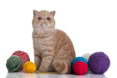 Persian exotic cat isolated with balls of different colours postcard Stock Photo