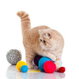 Persian exotic cat isolated with balls of different colours yarns Stock Photography