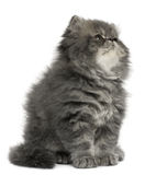 Persian kitten, 2 months old, sitting Stock Images