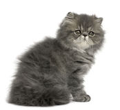 Persian kitten, 2 months old, sitting Royalty Free Stock Photos