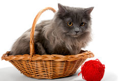 Persian kitten in a basket Royalty Free Stock Photos