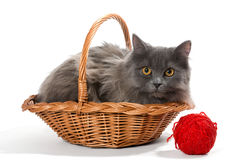 Persian kitten in a basket Royalty Free Stock Photography
