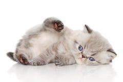 Persian kitten Stock Photos