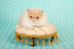 Persian kitten on foot stool Royalty Free Stock Photography