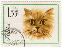 Persian (Longhair) cat on vintage post stamp. Persian (Longhair) cat on vintage, canceled post stamp from Poland Royalty Free Stock Image