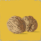 Persian walnut Royalty Free Stock Photos