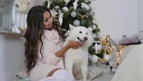 Persiga al amigo de un hombre, muchacha en suéter acogedor con un animal doméstico mullido se sienta cerca del árbol de navidad almacen de video