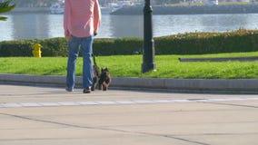 Persiga al caminante con dos perros en una ciudad grande almacen de video
