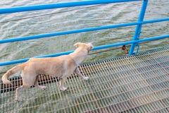 Persiga caminar en el puente del río en el parque Foto de archivo