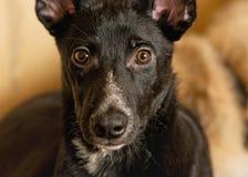Persiga de un refugio de animales sin hogar Foto de archivo libre de regalías