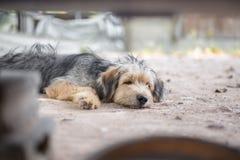 Persiga dormir Imagen de archivo libre de regalías