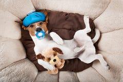 Persiga dormir o la reclinación de la resaca y del dolor de cabeza Fotografía de archivo