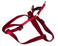 Persiga el harness Imagen de archivo libre de regalías
