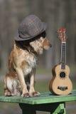 Persiga el perro de aguas del color de oro con un ukelele Ukreina Imagen de archivo