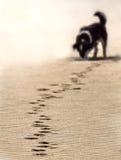 Paso del perro Fotografía de archivo libre de regalías