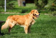 Perro en parque Imagen de archivo libre de regalías