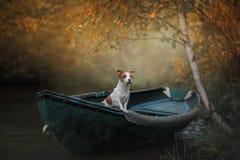 Persiga a Jack Russell Terrier en un barco en el agua foto de archivo
