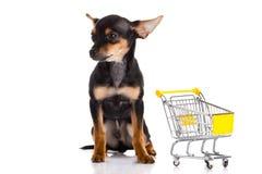 Persiga la chihuahua con la carretilla de las compras aislada en el fondo blanco Imagen de archivo