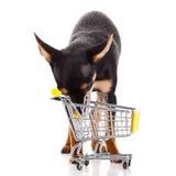Persiga la chihuahua con la carretilla de las compras aislada en el fondo blanco Foto de archivo
