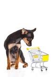 Persiga la chihuahua con la carretilla de las compras aislada en el fondo blanco Imágenes de archivo libres de regalías