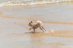 Persiga la diversión feliz corriente en la playa cuando viaje en el mar Imágenes de archivo libres de regalías