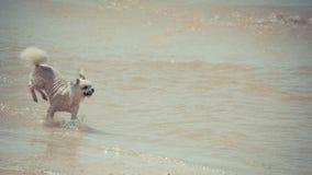 Persiga la diversión feliz corriente en la playa cuando viaje en el mar Foto de archivo libre de regalías