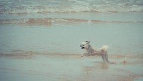 Persiga la diversión feliz corriente en la playa cuando viaje en el mar Imagen de archivo libre de regalías