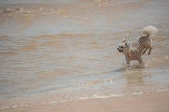 Persiga la diversión feliz corriente en la playa cuando viaje en el mar Fotos de archivo