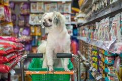 Persiga la espera tan linda un dueño del animal doméstico en la tienda de animales Foto de archivo