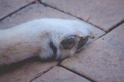 Persiga la pata Foto de archivo libre de regalías