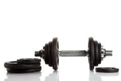 Persiga la pesa de gimnasia del pugdog aislada en el concepto blanco del deporte del fondo Fotos de archivo
