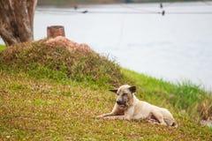 Persiga la relajación en el piso de la hierba en el jardín Fotografía de archivo
