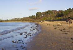 Persiga los amantes y sus animales domésticos que caminan la playa en Ballyholme un suburbio del condado de Bangor abajo en Irlan Fotos de archivo libres de regalías