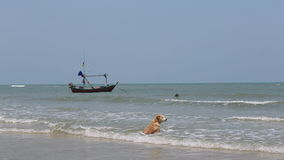 Persiga o assento e a apreciação do seascape em uma praia filme