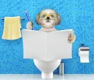Persiga o assento em um assento da sanita com o compartimento da leitura dos problemas ou da constipação da digestão ou o jornal  ilustração stock