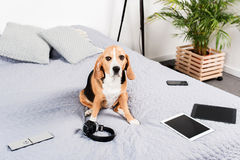 Persiga o assento na cama com dispositivos, os fones de ouvido e controlo a distância digitais da tevê Imagem de Stock Royalty Free