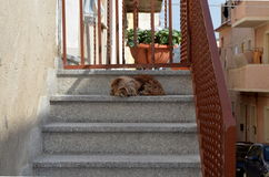 Persiga o assento na escadaria para defender sua casa Fotografia de Stock Royalty Free