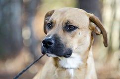 Persiga o cão misturado vira-lata da raça com focinho preto Foto de Stock
