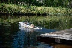Persiga o corredor e o salto na água foto de stock royalty free
