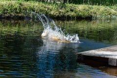 Persiga o corredor e o salto na água fotografia de stock