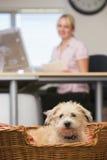 Persiga o encontro no escritório home com a mulher no fundo Fotografia de Stock Royalty Free