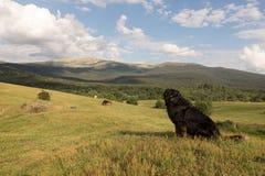 Persiga o encontro sobre a grama no vale verde no por do sol Imagem de Stock Royalty Free