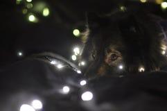 Persiga o sono Foto de Stock Royalty Free