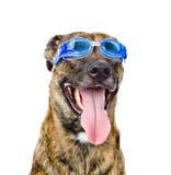 Persiga os óculos de proteção vestindo da natação isolados no fundo branco Foto de Stock