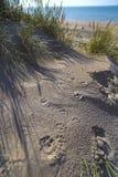 Persiga a Paw Prints en la arena en las dunas en De Haan, Mar del Norte co del belga Fotografía de archivo libre de regalías